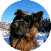Free Dog Assessments